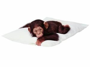 Postal: Pequeño chimpancé