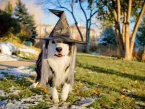 Postal: Perro celebrando Halloween