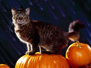 Postal: Gato preparado para Halloween