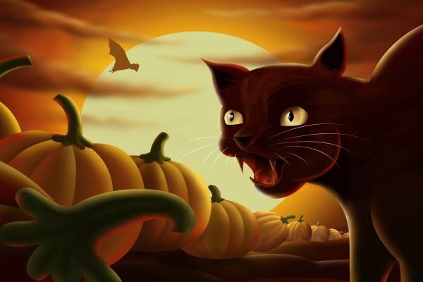 Gato entre calabazas en la noche de Halloween