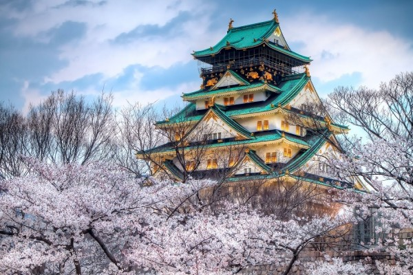 Templo japonés rodeado de cerezos en flor