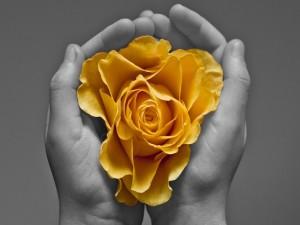 Con una flor amarilla entre las manos