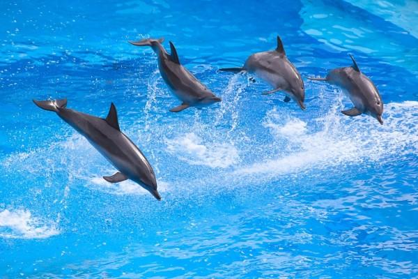 Delfines saltando en grupo