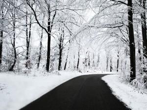 Postal: Carretera atravesando un bosque nevado