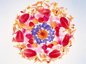 Círculos florales