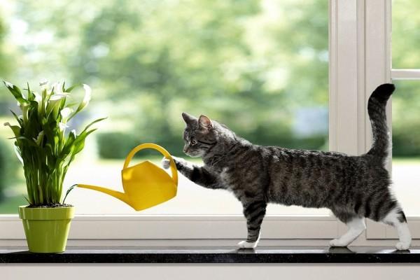 Gato regando las plantas