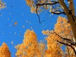 Hojas cayendo en otoño