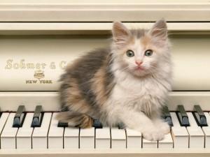 Postal: Gatito sobre las teclas de un piano blanco