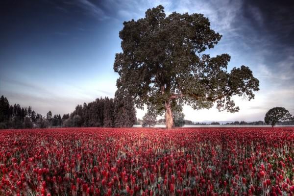 Árbol majestuoso sobre un lecho de flores rojas