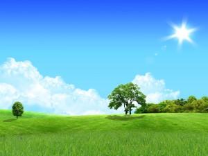 Un sol brillante sobre una verde pradera