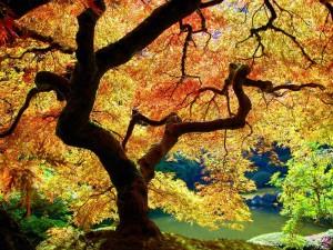 Postal: Luz filtrada a través de las hojas amarillas de un árbol