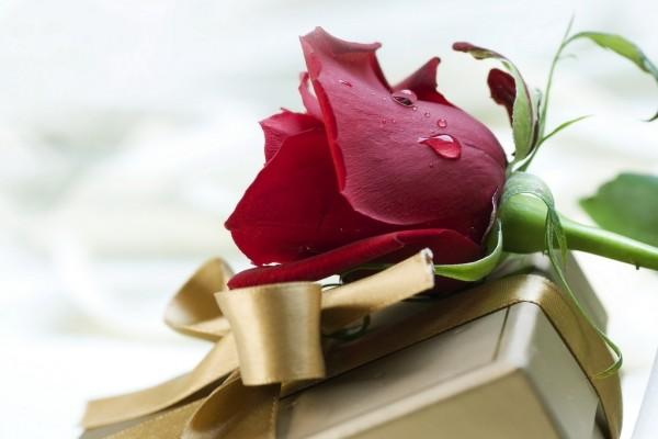 Un regalo y una rosa