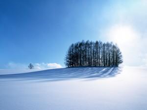 Postal: Nieve virgen