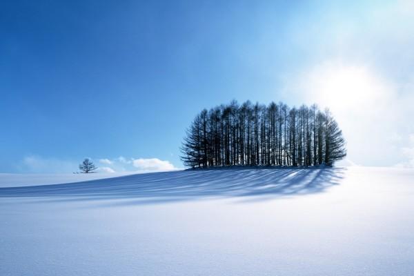 Nieve virgen