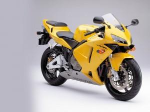 Honda CBR 600 amarilla