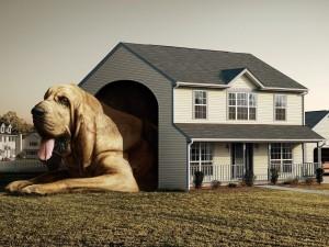 Postal: La casa del perro