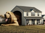 La casa del perro