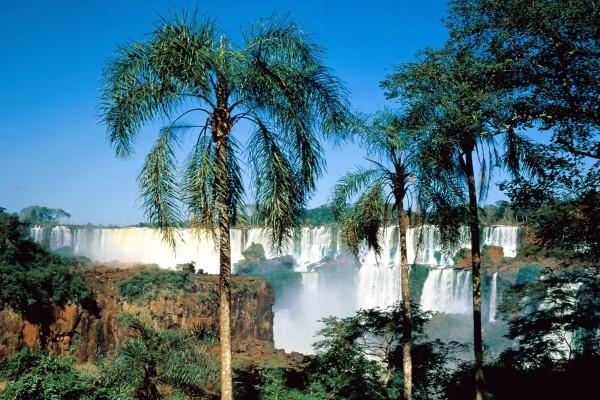 Palmeras cerca de las Cataratas del Iguazú (Argentina)