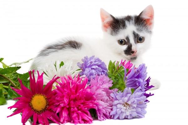 Gatito blanco con manchas negras junto a unas flores