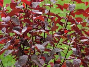 Arbusto recién regado