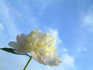 Postal: Una flor blanca mirando al cielo