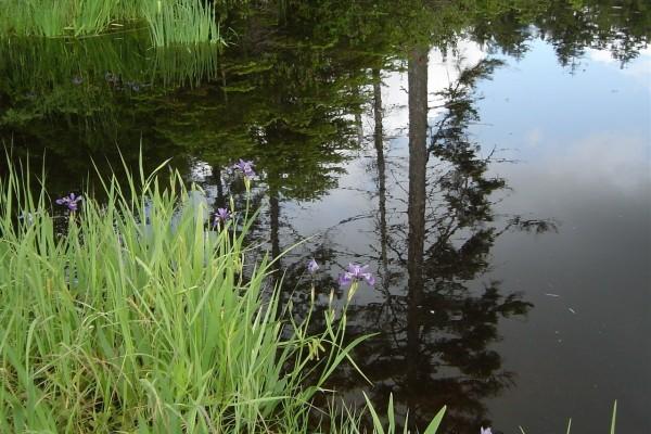 Plantas y flores a la orilla del agua