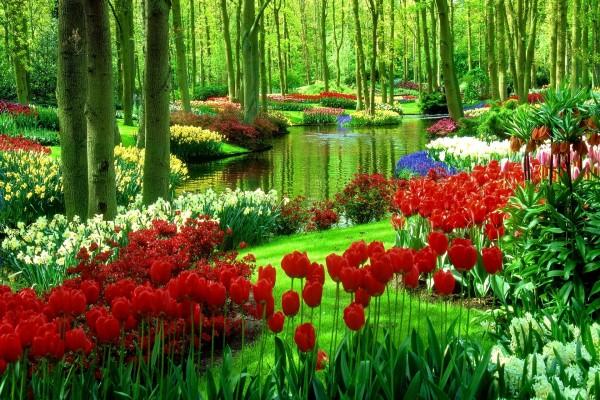 Keukenhof, también conocido como el jardín de Europa (Lisse, Holanda)