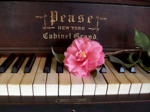 Una flor sobre las teclas de un viejo piano