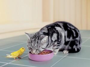 Un periquito y un gato como buenos amigos