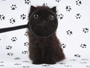 Gato rastreando las huellas