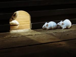 Ratones escondidos para no ser cazados por el gato