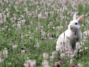 Conejito blanco en un prado de flores