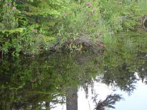 Vegetación en la ribera de un río