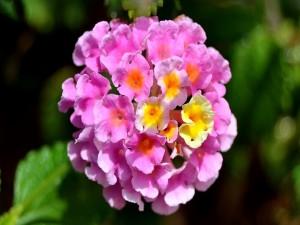 Flores en forma de campanillas rosas