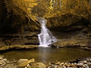 Postal: Cascada dorada