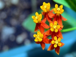 Postal: Flores exóticas en tonos anaranjados