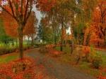 Paisaje otoñal con las hojas de los árboles caídas