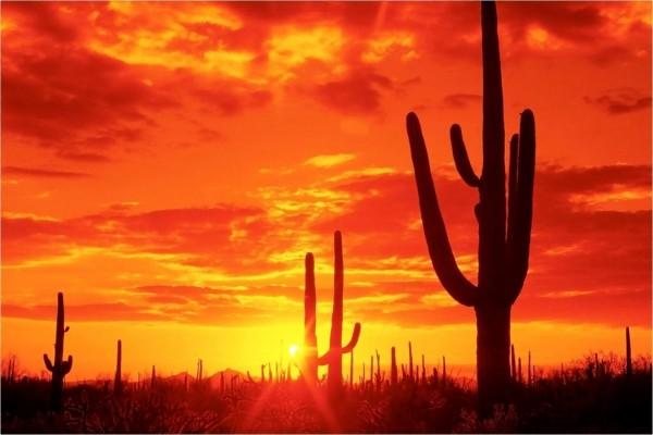 Cactus bajo un cielo rojizo en el Desierto de Sonora (Arizona)