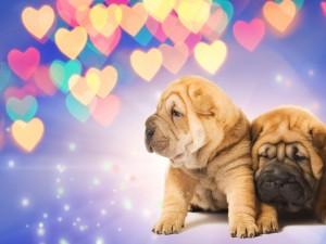 Postal: Cachorros Shar Pei