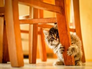 Postal: Gatito escondido detrás de la pata de una silla