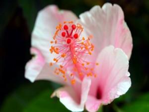 Aparato reproductor de una flor