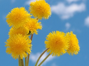 Flores amarillas circulares