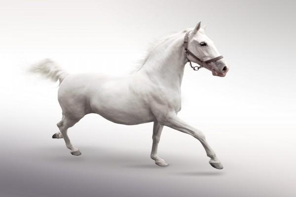 Caballo blanco en movimiento