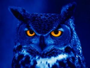 Postal: Buho azul con los ojos anaranjados
