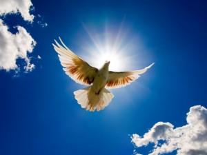 Postal: Una paloma blanca volando bajo un cielo azul