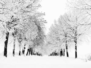 Árboles resistiendo el invierno