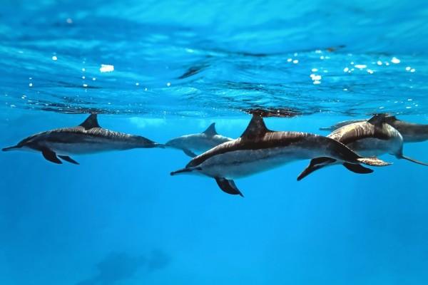 Delfines bajo el agua