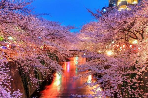 Canal de agua flanqueado por cerezos en flor