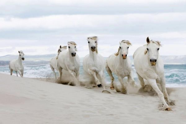 Caballos blancos en la playa