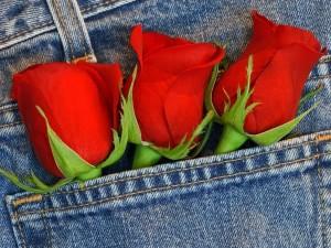 Postal: Tres rosas en el bolsillo de unos pantalones vaqueros